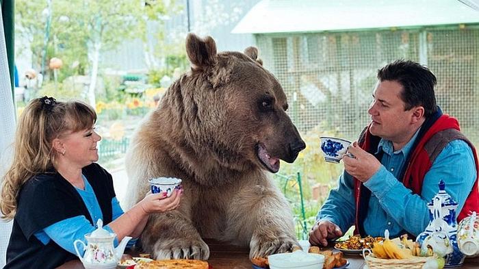 За столом сидят и пьют чай медведь, мужчина и женщина как одна большая межкультурная семья